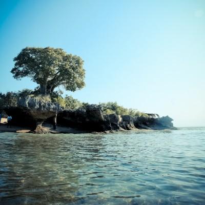 KENYA - Arbre sur une plage...