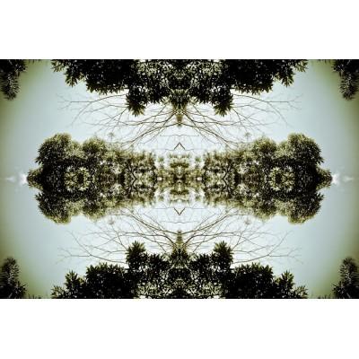 TREES & SKY - paysage n°01