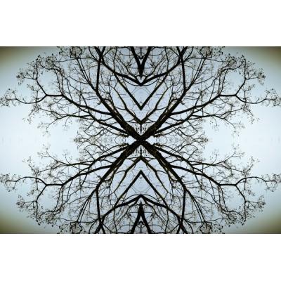 TREES & SKY - paysage n°06