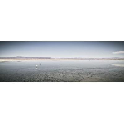 CHILI - Salaar d'Atacama - 16