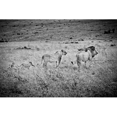 KENYA - Une famille de...