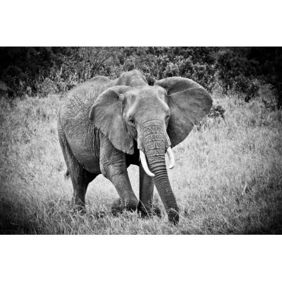 KENYA - Éléphant - 20