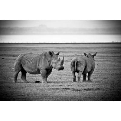 KENYA - 2 Rhinocéros - 27