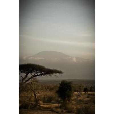 KENYA - Le Kilimandjaro - 33